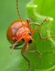 昆虫微距摄影作品