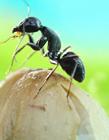 蚂蚁照片 蚂蚁的照片