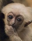 小猴子图片大全可爱 最可爱的小猴子图片