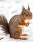 雪地里的动物