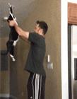 猫咪ps搞笑图片