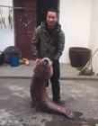 乌青鱼图片 最大的乌青鱼图片