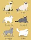 猫咪品种大全及图片