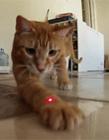 猫咪可爱动态图