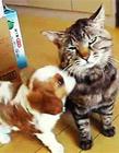 猫咪和狗狗搞笑视频