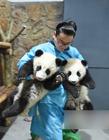 熊猫萌宝和帅奶爸