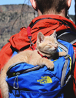 带猫去旅游 猫喜欢旅行吗
