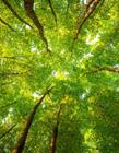 阳光透过树叶图片