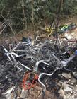共享单车被损害的图片