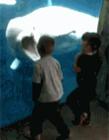 海底世界白鲸图片大全