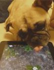 看电视的动物 动物玩手机
