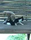猫和猴子视频 猴子打得过猫吗 猫和猴子哪个厉害