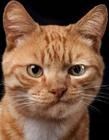 猫咪品种介绍