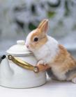 最可爱小兔子图片 可爱的小兔子图片大全