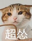 超怂猫表情包 猫咪超怂表情包