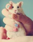 可爱的小白鼠图片 小白鼠的图片