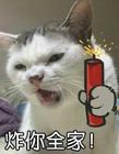 搞笑猫咪表情包 猫咪表情包带字图片图片