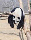 动物睡觉萌萌哒图片