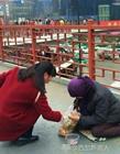 女子给跪地乞丐一袋麻花 被扔进垃圾桶