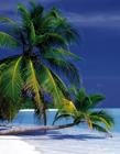海边沙滩椰子树图片