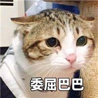 委屈巴巴表情包猫图片