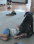 狗欺负小孩子 小孩子被欺负