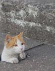 小流浪猫图片 流浪猫的图片