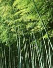 竹林图片大全风景图片