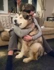 抱大狗图片 怎么抱大狗