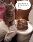 寻猫启事搞笑