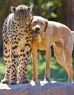 动物的友谊 动物间的爱