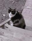为什么很多动物都怕猫 猫咪有多厉害
