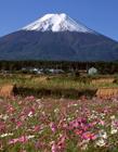 日本富士山风景 日本富士山春天风景图片