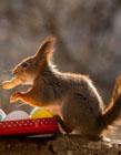 松鼠可爱图片