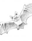 蝙蝠简笔画图片大全 蝙蝠怎么画