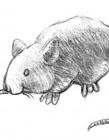 小老鼠简笔画怎么画