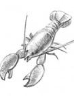 龙虾简笔画图片