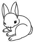 兔子简笔画步骤