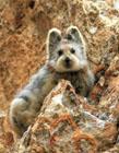 最罕见的动物图片