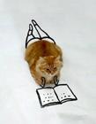 搞笑可爱猫咪图片