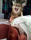 猫咪表情大全