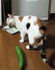 猫和水果的爱恨纠葛