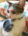 给猫咪化妆 猫咪化妆美丽的猫咪