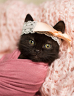 猫咪摄影作品