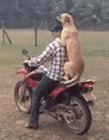 狗开车的搞笑视频