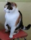 爆笑猫猫搞笑视频