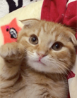 猫咪粘人的表现