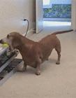 怎么让狗狗自己玩