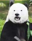 恶搞熊猫表情包
