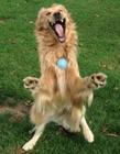 狗狗超级恶搞图片